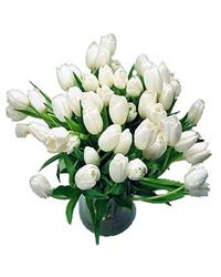 White tulips. Rostov-on-Don